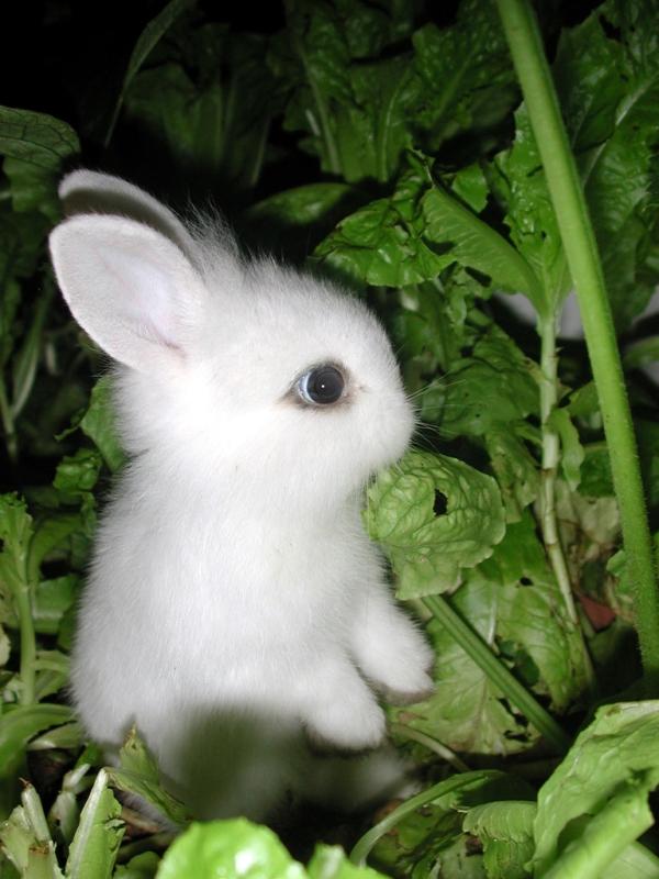 little-bunny